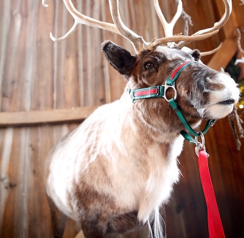 Christmas At The Ranch 2019 – December 7th & 8th